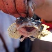 Vissen met de VWN (1)