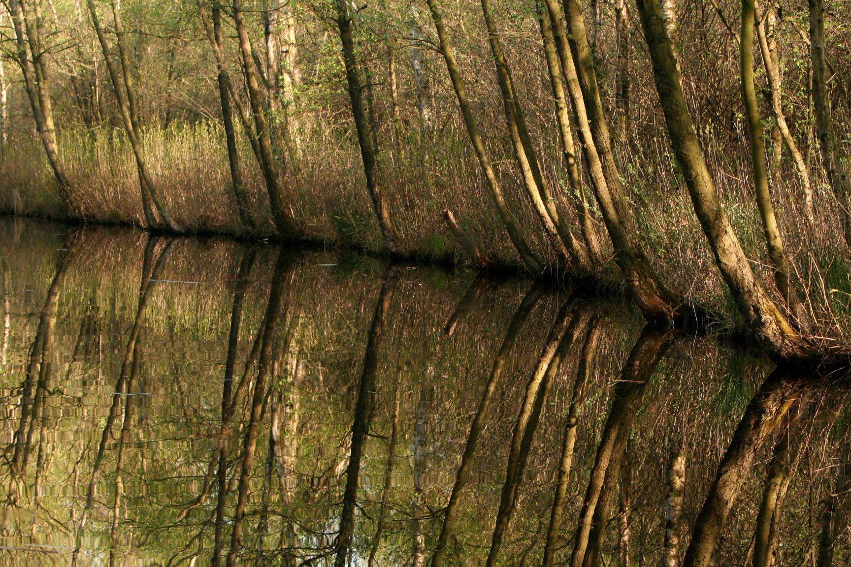 Martelaarsgracht, het mooiste stukje Naardermeer: hier in het moerasbos groeit gewoon actief levend veen met veenmoskussens, daar hoef je geen bos voor te kappen