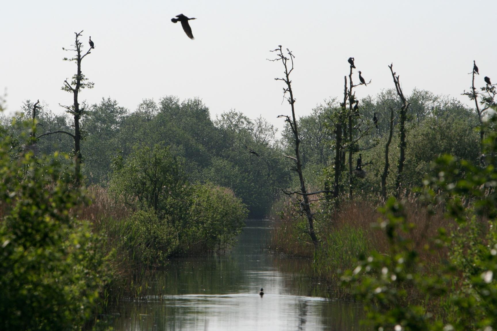 De watergangen van het Naardermeer werden ooit gegraven om het gebied te ontginnen tot landbouwgrond