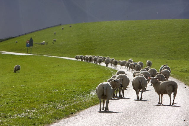 Multifunctioneel en overal inzetbaar, de wolproducenten