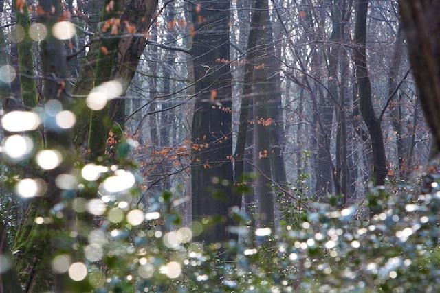 Alle bos kappen en opstoken in houtige biomassa-centrales, dat zal de boskabouters leren!