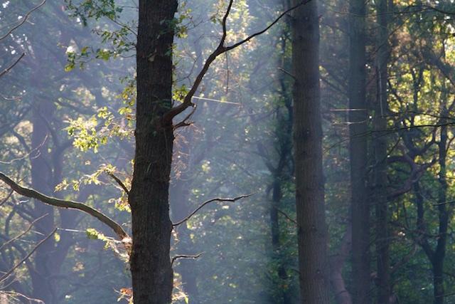 Alle bos werd rap gekapt in de tijd toen 'vroeger alles beter was', de Middeleeuwen.