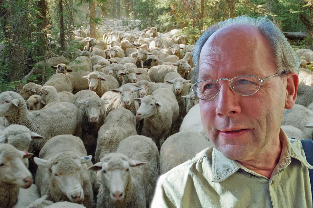 Andre Bijkerk achtergrond herd mentality sheep-sweetgrass2