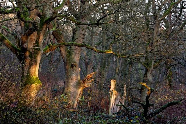 Klimaatbeleid is oneindig veel schadelijker- zoals voor onze bossen en natuur- dan een beetje klimaatopwarming