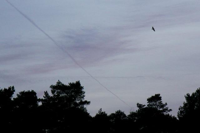 Een raaf heeft altijd lol in het vliegen, zo beweegt hij door de lucht