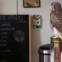 ...wie zich in de dataverzameling rond natuur verdiept, is verbaasd over hoe weinig we eigenlijk ECHT weten. De meeste 'deskundigen' papegaaien elkaar maar wat...