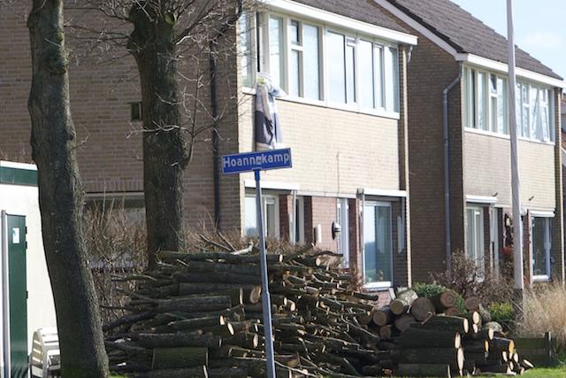 Met al die houtkachels, en houtkachelsubsidie, blijft geen boom meer staan...