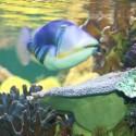 Lipvis (?) die riffen kan begrazen... Al miljoenen jaren leven deze vissen op riffen, die al miljoenen jaren bestaan bij veel hogere CO2-concentraties en temperaturen