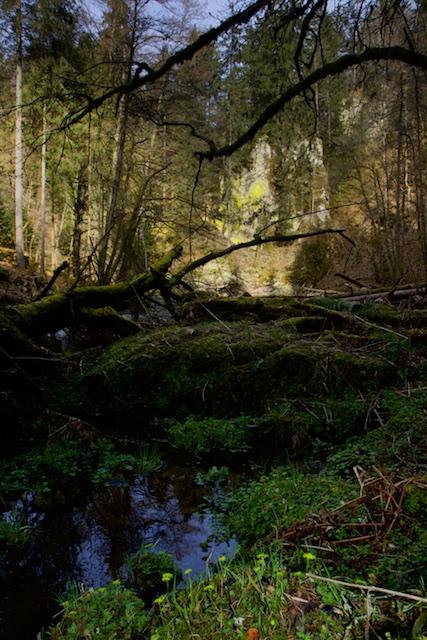 Hier was de Wutach-Clan van Wanderfreunde verzot op, dit stukje Schlucht vlakbij een oud Rauberschloss, een fort gebouwd op de kloof
