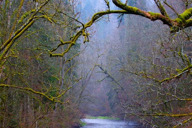 De Wutach ruist door het woud, het vocht laat baardig mos op de takken van boswilgen, essen, esdoorns (gewone en Noorse) en eiken.