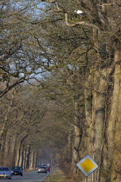 Bomensloop door combinatie stooksubsidies ('groen' /klimaatflauwekul) en hersenloze gemakzucht/aansprakelijkheidscultuur over 'veiligheid' Angst/Code Oranje