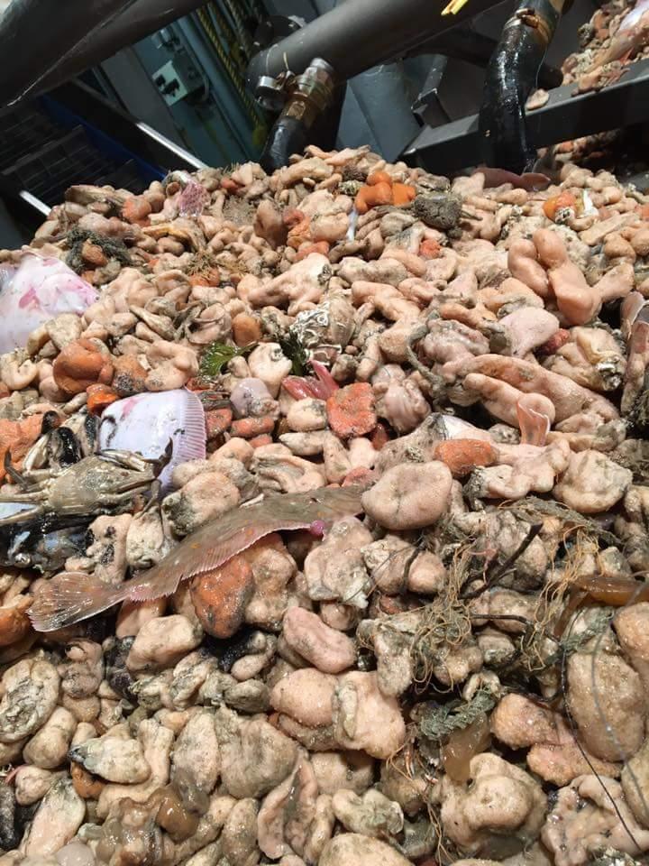 Hup, de dodemansduim is het onkruid van de zeebodem, niet het 'zeldzame koraal' dat NGO's er van maken. Dit komt met 1 trek boven