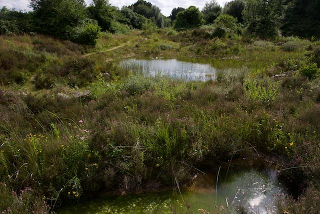 De 'Oase', je kunt het ook Edotopia noemen, handgemaakte natuur naar herpetologisch ideaal