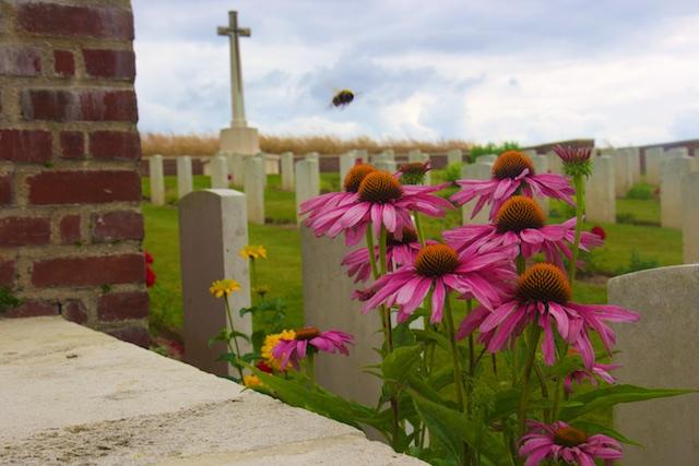 Biodiversiteit bloeit bij de veldjes van de dood.