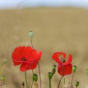 RZ16.Somme (53)