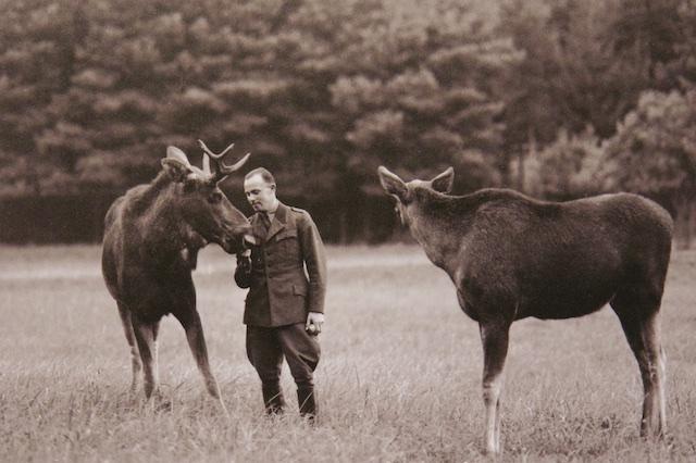 Net als Han Lindeboom op Texel, liet Goering Elanden uit Oost Pruisen overkomen. Op de foto staat de Duitse natuurfilmer Horst Siewert, 1 van de eerste succesvolle natuurfilmers