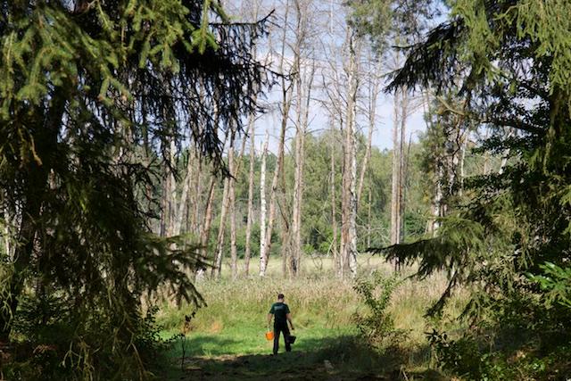 De wild-dichtheid is kunstmatig hoog door bijvoedering voor de jacht.