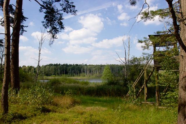 Typisch Schorfheide-landschap. Weinig spectaculair, een soort Veluwe plus meertjes