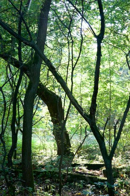 Van Carinhall zelf vind je enkel nog wat restanten van de fundering, overwoekerd met vegetatie