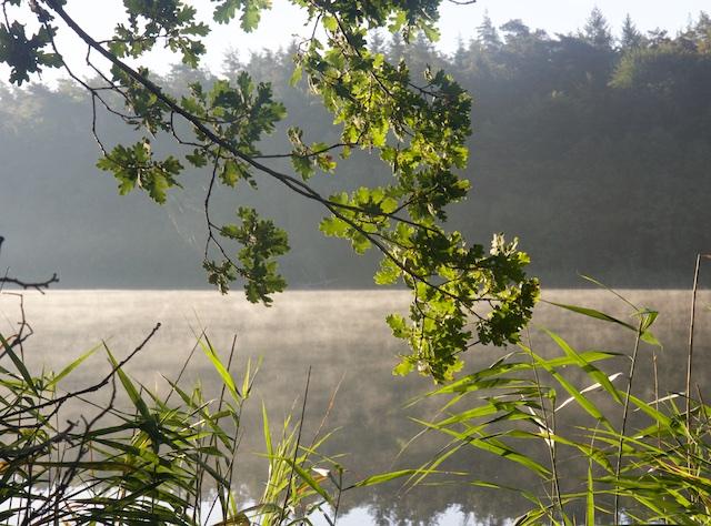 Eikenloof boven de Wuckersee, waar Carin begraven lag