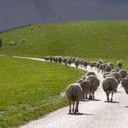 Mensen zij kuddedieren die anderen imiteren. Als  1 of 2 mensen in een groep aan hun neus blijven wrijven, gaat de rest onbewust dat ook doen