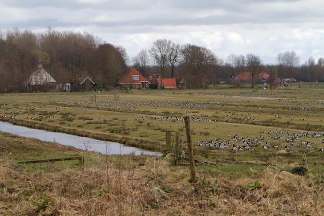 De woeste gronden van ex-landbouwgrond, na plaatsen van bordje nu 'nieuwe natuur'
