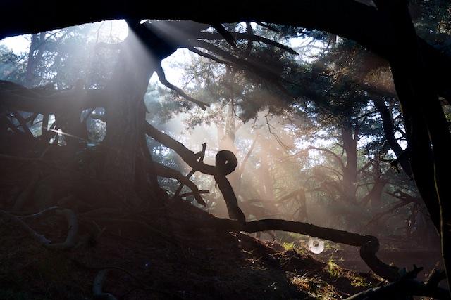 Klimaatbos is het tegengestelde van natuurbos zoals hier: daar zijn snelgroeiende jonge monocultures voor nodig