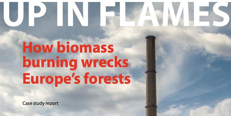 50 procent van papieren groene energie komt in EU van bos-stook, vooral Amerikaans bos, maar in toenemende mate ook uit landen als Letland