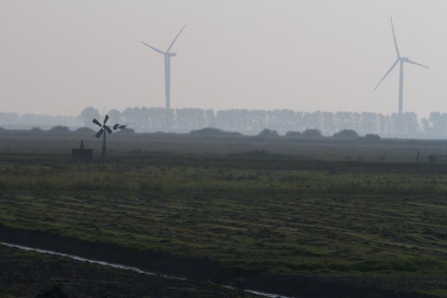 De Dalen der Treurnis: wildernis van het Haringvliet die miljoenen bezoekers uit het veel leukere Rotterdam zou moeten trekken