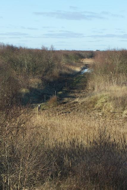 Operatie Eilandstorm: een elektrische verbindingszone van subsidiepot naar natuurcompensatiegeld