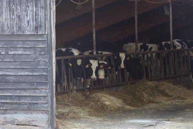 ...en de koeien van de boer. Wel de melk en het vlees, maar dan zonder het gelul