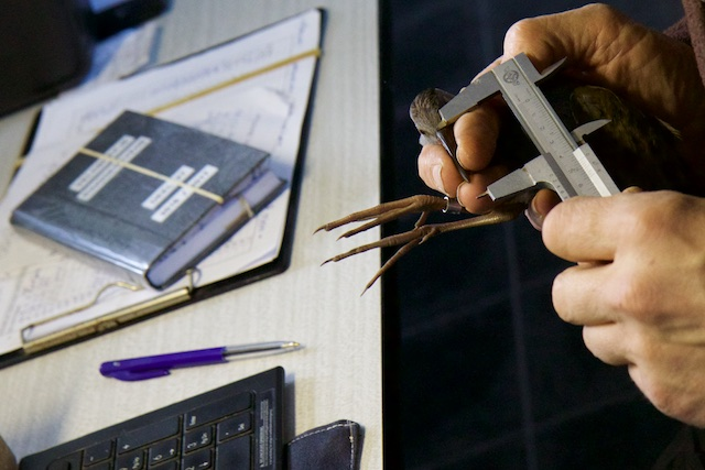 Arbeidsintensief maar noodzakelijk voor echte natuurkennis: langjarige meetreeksen