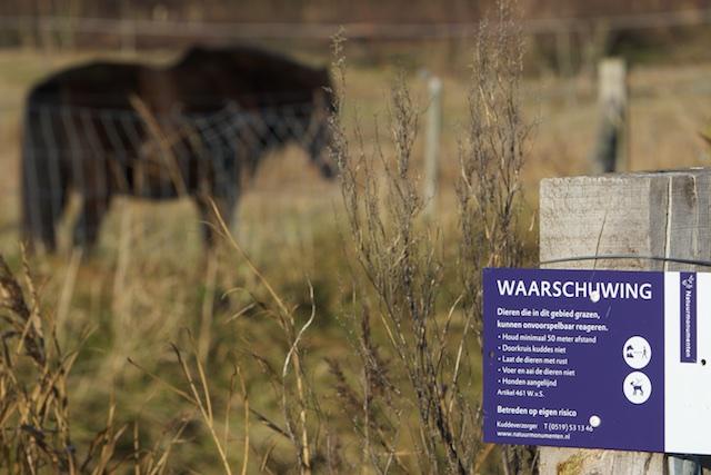 De Vallei der Paarden. De resultaten van begrazing zijn zeer voorspelbaar....