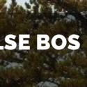 ...waar zou het Schoorlse bos belanden, nadat Staatsbosbeheer het kapt?