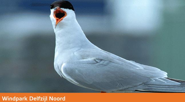 Eneco wordt hier gesteund door Vogelbescherming Nederland, in ruil voor een vogeleilandje