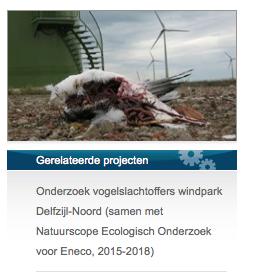 Vogelslachtoffer bij molens van Eneco. Altenburg en Wymenga doet nu onderzoek naar slachtofferes Delfzijn Noord Eneco