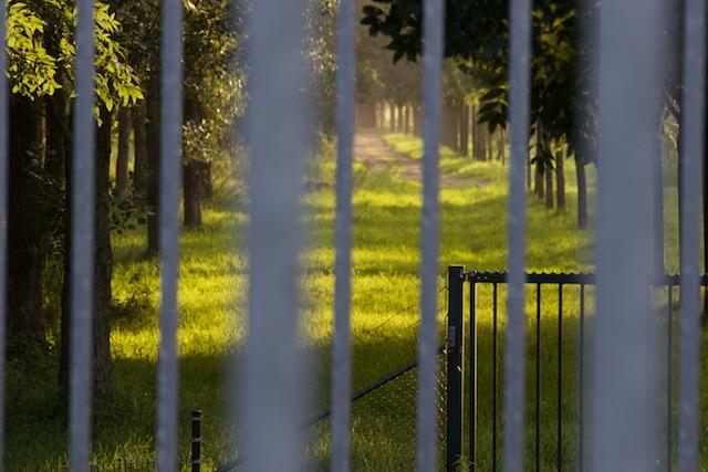 Enclosures, hekken zetten rond de commons want vrijheid van het individu ruineert het collectief (Hardin 1968)