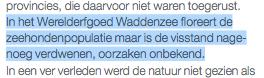 Het is een mysterie volgens Mr Springtij Wouter van Dieren