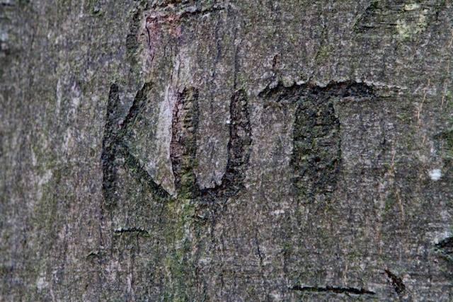 ...je kunt het ook op bomen kwijt wat je in blogs wilt ventileren