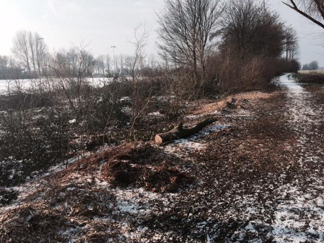 Mijn gemeente De Friese Meren zaagt ook alle dorpsgroen stuk, dat hout verpatsen ze ondermeer aan biomassacentrales
