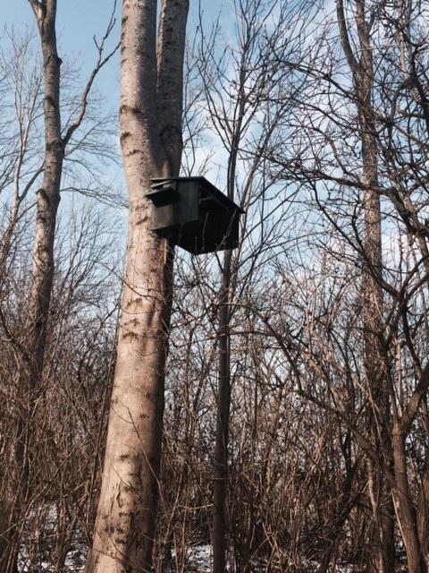 Op de rol voor de sloop, er hangt een kast voor boommarters. Bos kapot zagen kun je 'groen' noemen wanneer bomen 'biomassa' heten en goed voor 'klimaat'