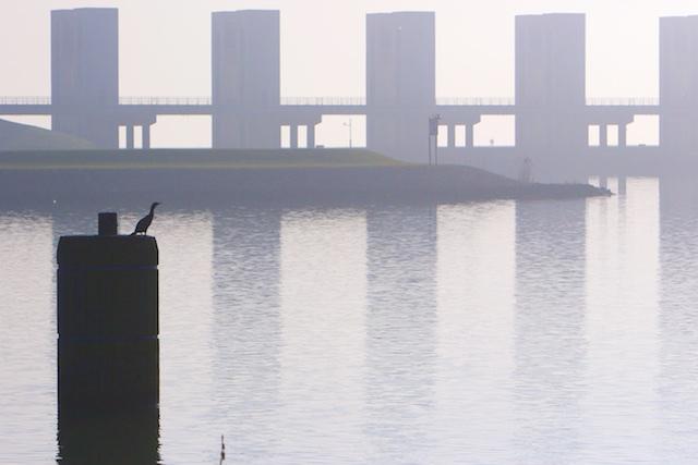 ..en wat dacht u van deze aalscholver bij de sluizen van de Houtribdijk?