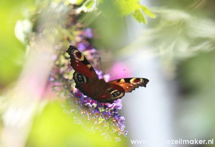En na de nodige ingrepen: 1 bloemen en vlinderzee