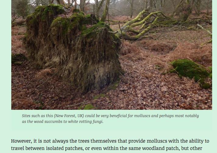 Afvalhout bestaat niet in natuurgebied, er bestaat wel subsidie- en houthonger bij natuurclubs