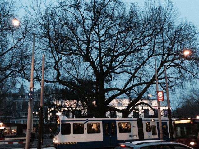 Een oude boom geeft allure, en allure trekt mensen