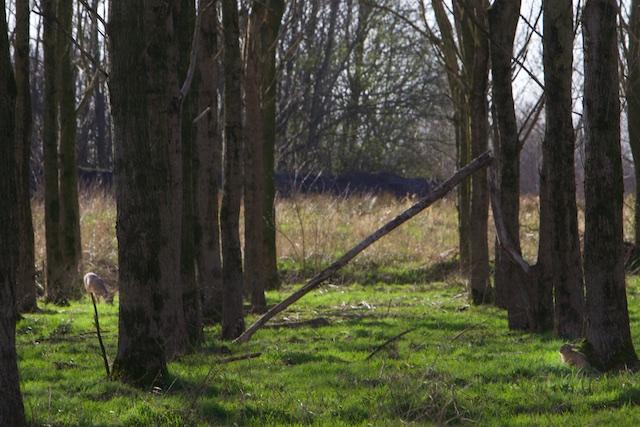 Zoek het wild in dit plaatje, de vuilstort bij Heerenveen, afgesloten gebied voor wandelaars
