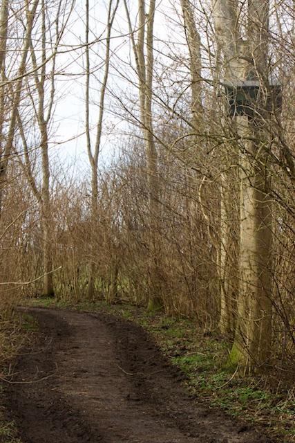 In het ongekapte deel hangt een boommarter/steenmarterkast, opgehangen door een 'Net fan hjirre hai siltjr wol euven fertelje'