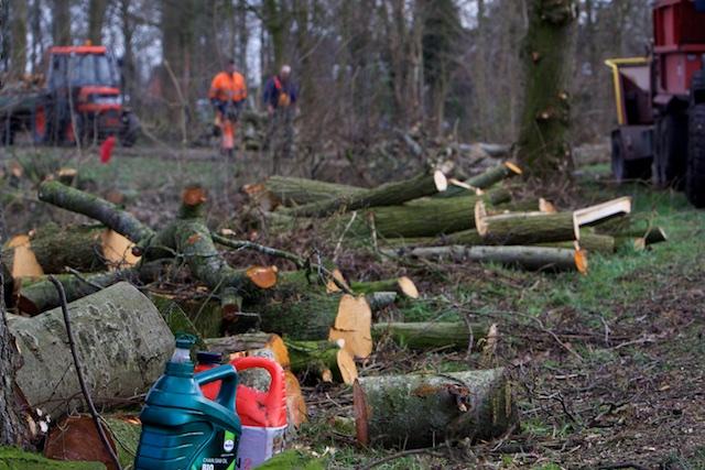 'onderhoud' van groen in mijn Gemeente de Friese Meren. Alles in 1 keer kaal zodat je 10 jaar niet weer hoeft terug te komen
