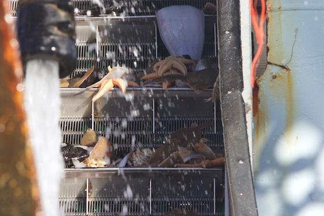 'discards'/voedsel voor andere zeedieren als de Jan van Gent