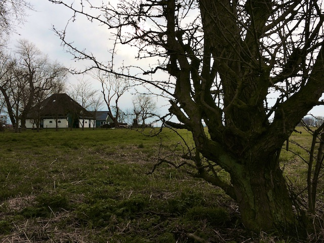 Het geheim van Wieringen: karaktervol oud land bij Stroe met oude meidoorn